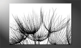Moderne Wanddekoration<br>'Detail Of Dandelion'