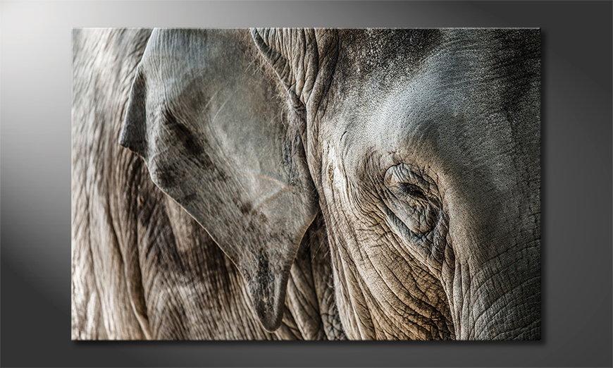 Das Leinwandbild Eye of Elephant