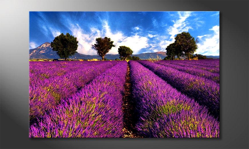 Das Leinwandbild Lavender