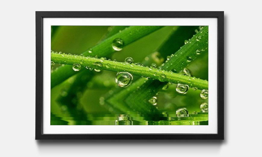 Bild gerahmt Water Drops