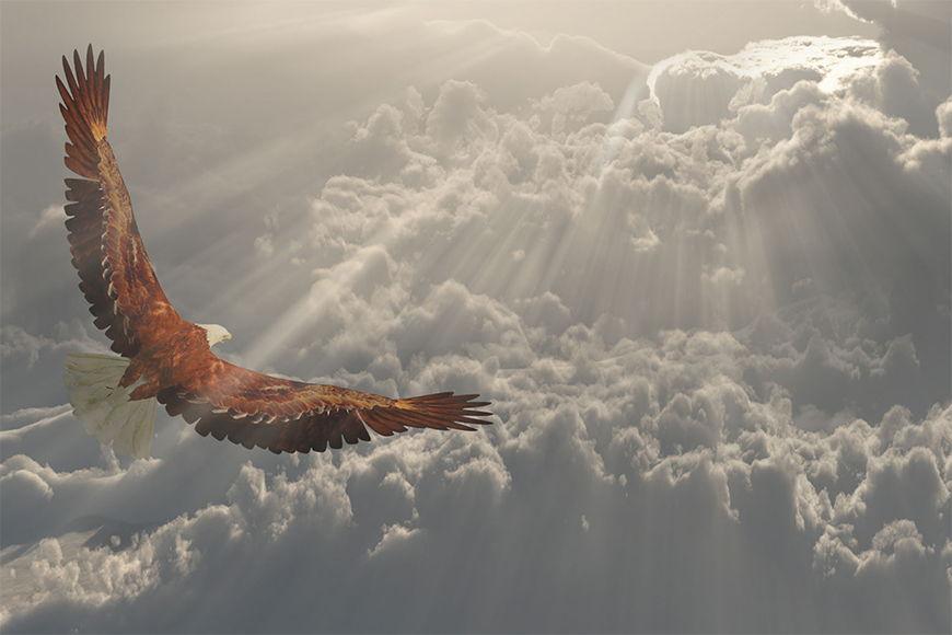 Naturmotiv Fliegender Adler in S bis XXL