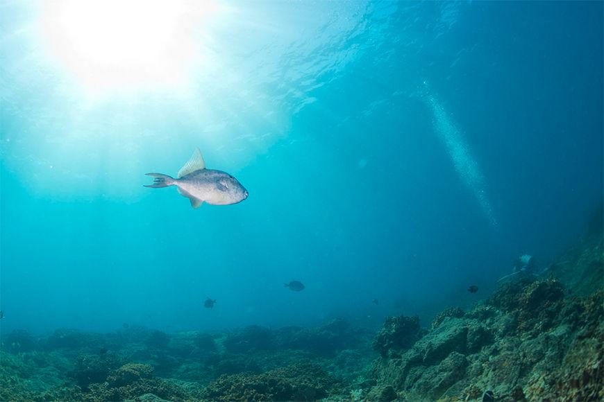 Vlies Fototapete Unterwasser ab 120x80cm