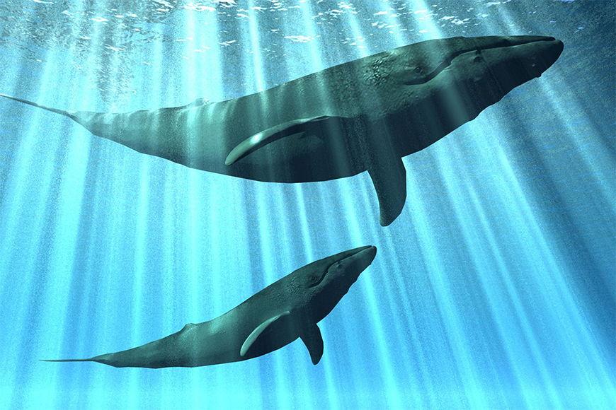Vlies Fototapete Wale in 6 Größen