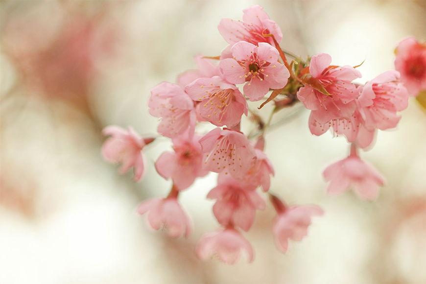 Vliestapete Blütenzauber ab 120x80cm